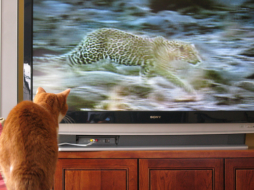 An hour spent watching TV over 25 years of age cuts lifespan by 22 minutes, a new study says. Image: BitHead / Flickr (CC)