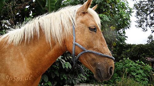 Social media helps save malnourished horses near Centralia, Washington (Image: epSos.de (CC) via Flickr)